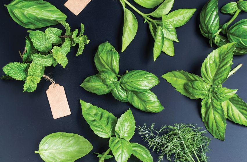 Kết hợp nhiều loại thảo mộc vào chế độ ăn uống của bạn