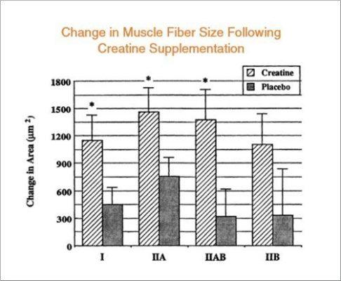 Creatine có thể gây ra nhiều thay đổi trong các tế bào cơ, báo hiệu cơ thể bạn xây dựng các protein cơ mới và tăng khối lượng cơ bắp.