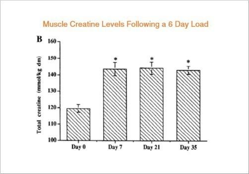 Creatine bổ sung trong cơ bắp của bạn sau đó có thể được sử dụng để sản xuất ATP, cung cấp một lượng nhỏ năng lượng bổ sung trước khi tập luyện mệt mỏi.